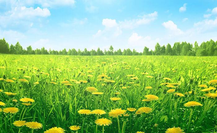 Sunshine over Sunflowers